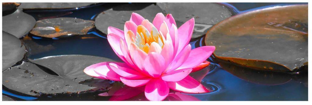 CHRISTELLE SCHNITZLER - numérologie - lotus
