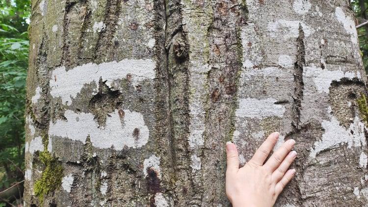 Christelle Schnitzler coach systémicienne et sophrologue arbre forêt sylvothérapie